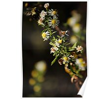 Bee Stalk Poster