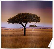 Serengeti Poster