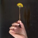 Pressed Dandelion by Angel Szafranko