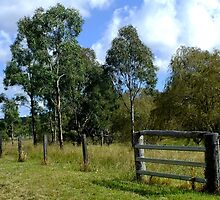 The Aussie farm fence by sandysartstudio