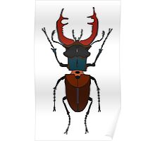Male stag beetle Poster