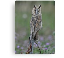 Cute and Cuddly Canvas Print