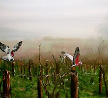 Where are the grapes? by Elisabeth Dubois