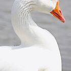 Duck Duck Pose by Rick McFadden