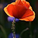 Eternal love poppies . by Brown Sugar .Favorites: 5 Views: 358 .  So happy friends !!! Woo Hoo !!! by © Andrzej Goszcz,M.D. Ph.D