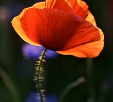 Eternal love poppies . by Brown Sugar .Favorites: 5 Views: 358 .  So happy friends !!! Woo Hoo !!! by AndGoszcz