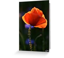 Eternal love poppies . by Brown Sugar .Favorites: 5 Views: 358 .  So happy friends !!! Woo Hoo !!! Greeting Card