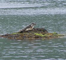 Common Seal Pup, Loch Melfort by Jonathan McColl