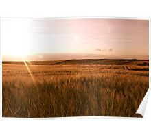 Barley Fields And The Setting Sun. Poster