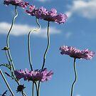 I Love Purple by Christine Ford