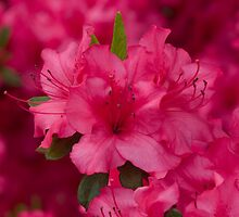 Spring's Color Explosion! (As-Is) by Gene Walls