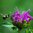 Busy Bee by Diane Blastorah