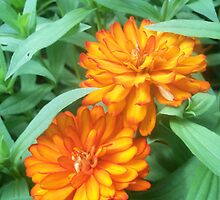 Two Happy Flowers by Shaun  Gabrielli