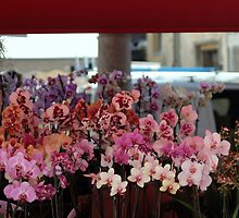 Orchids & Orchids by sstarlightss