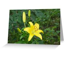 Yellow Lily, Greeting Card