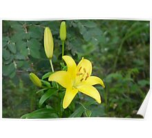 Yellow Lily, Poster