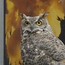 Shadow, the Great Horned Owl by Kay Hale