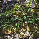 Ferns in the Walls by Lenny La Rue, IPA