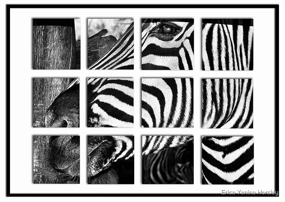 Zebra Puzzle by Erica Yanina Horsley
