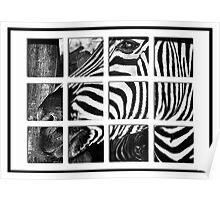 Zebra Puzzle Poster