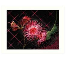 """Red Gum Blossom's"" Art Print"