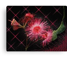 """Red Gum Blossom's"" Canvas Print"