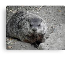Groundhog day! Canvas Print