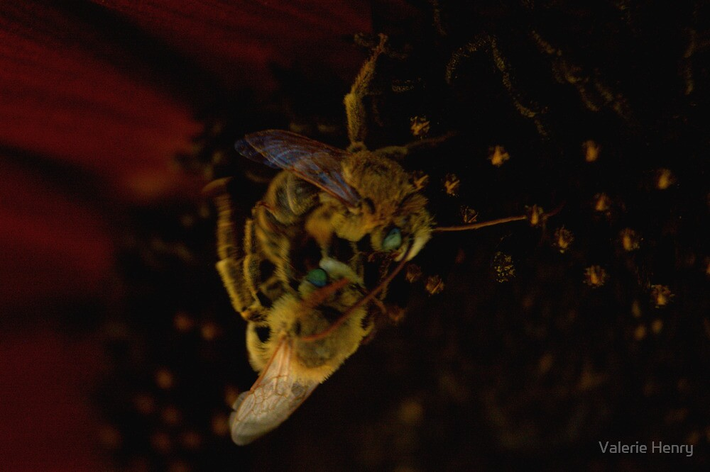Fighting Bees. by Valerie Henry