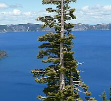 Crater Lake Oregon Tree by 2HivelysArt