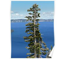 Crater Lake Oregon Tree Poster