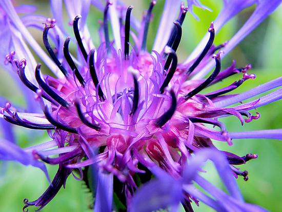 Spiky! by Amy Hochman