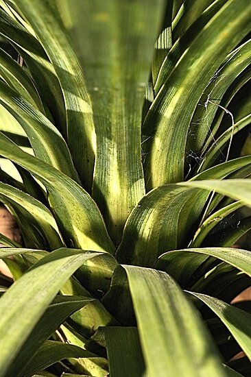 Palm Green by Joy Watson
