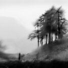 tree's in the rain by marshall calvert  IPA