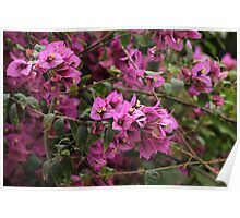 Purple Flowers Blooming on a Tree Poster