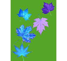 Nature - Inverted Leaf Photographic Print