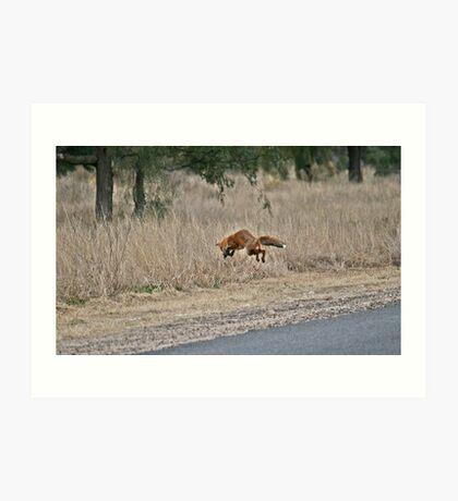Pouncing Fox Art Print
