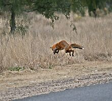 Pouncing Fox by Wendy78