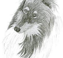 Black Lassie, Collie Sketch by Jane McDougall
