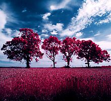 Aero infrared trees by David Cooper