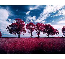 Aero infrared trees Photographic Print