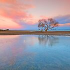 The Tidal Tree - Victoria Point Qld Australia by Beth  Wode