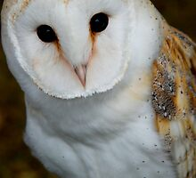 No YOU'RE a Twit Twoo! by Rebecca Eldridge