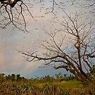 Birds in a Tree - South Johnstone NQ by Giovanna Devlin