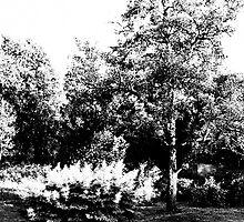 The Pear Tree. A Bush. by tutulele