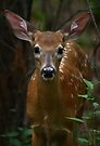 Close Encounter - White-tailed Deer by Jim Cumming