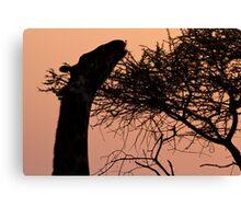 Sunrise Giraffe Canvas Print