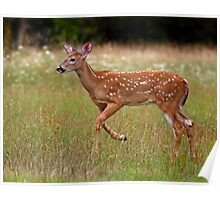 Fawn and Free - White-tailed Deer Poster