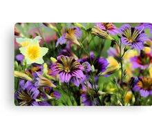 A Summer Display of Color (Painted Tongue) Canvas Print