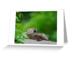 Pondering Life  Greeting Card