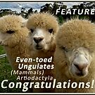 Featured in Even-toed Ungulates banner by Baina Masquelier